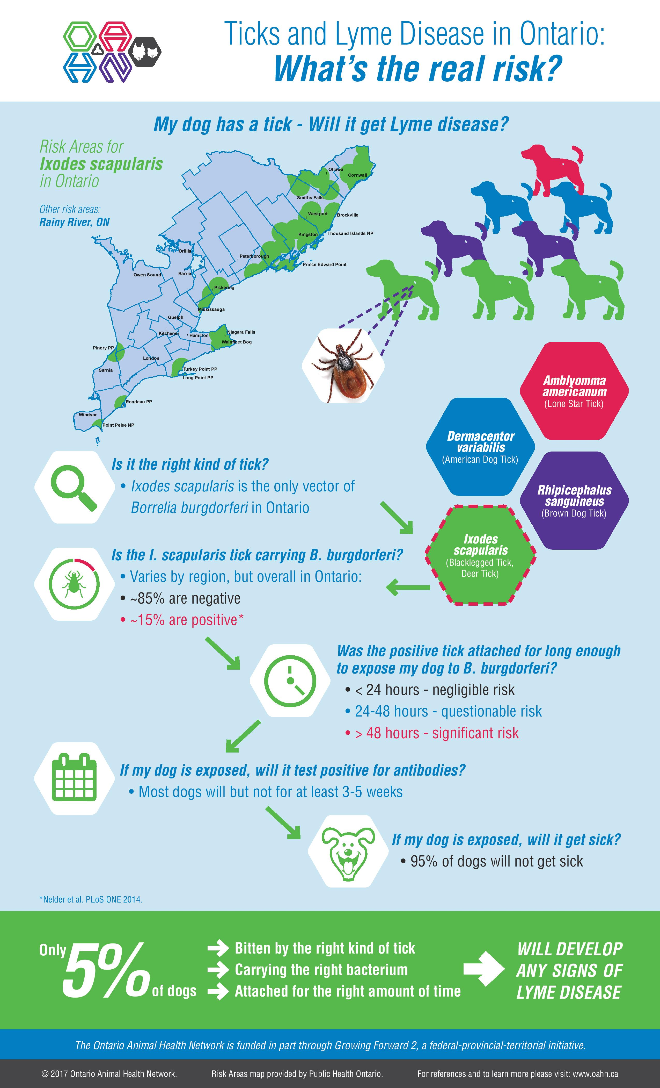 Ticks And Lyme Disease In Ontario What S The Real Risk Infographic And References