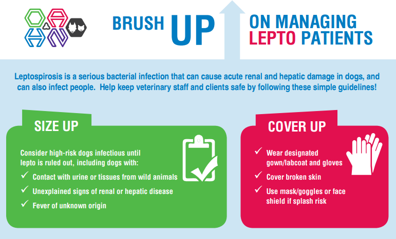 Brush up on Managing Lepto Patients – A Leptospirosis Infographic