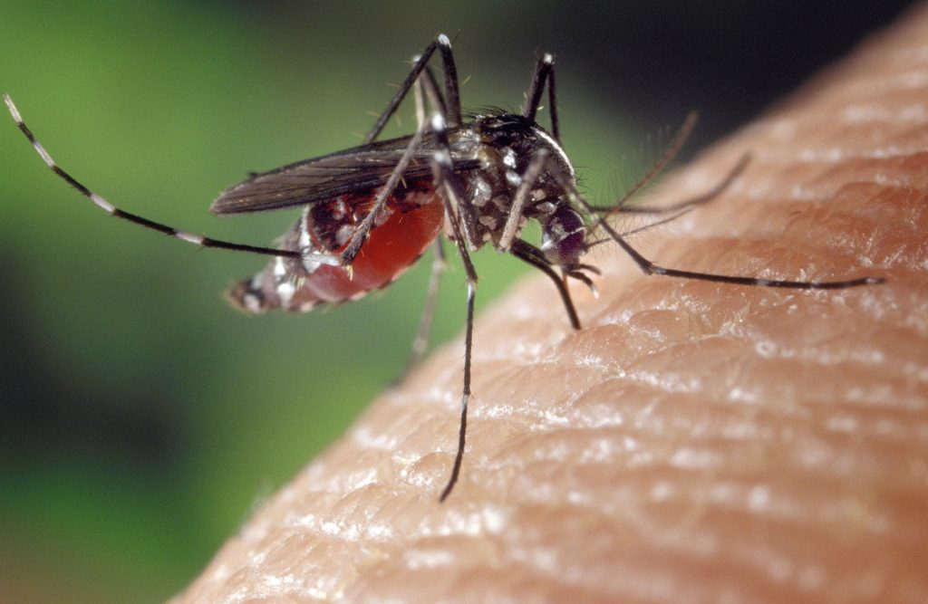 Vector-Borne Diseases – Links and Resources