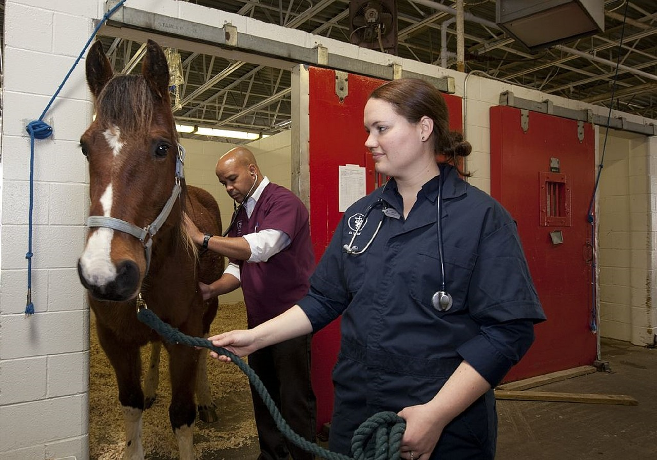 Two vets with a horse in a barn