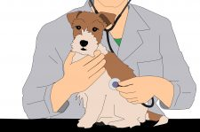 Drawing of a dog with a vet behind it, using a stethoscope on the dog's side