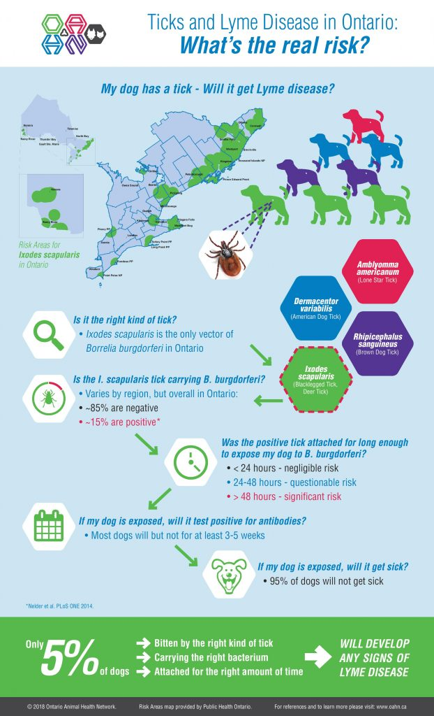 OAHN Lyme Disease Infographic