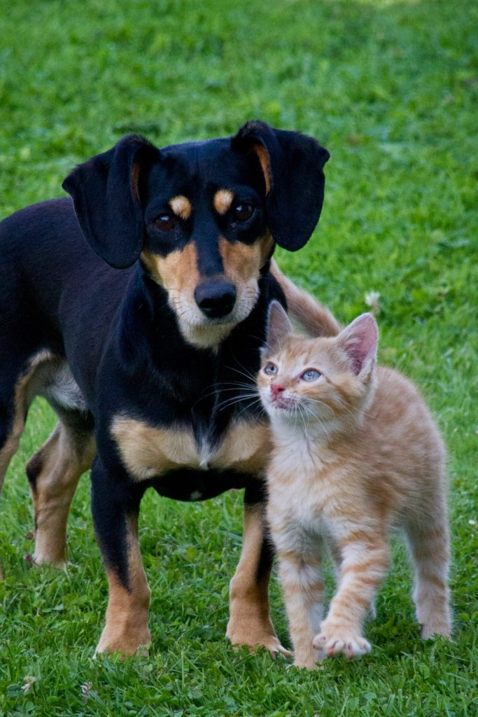 kitten and puppy beside each other on grass