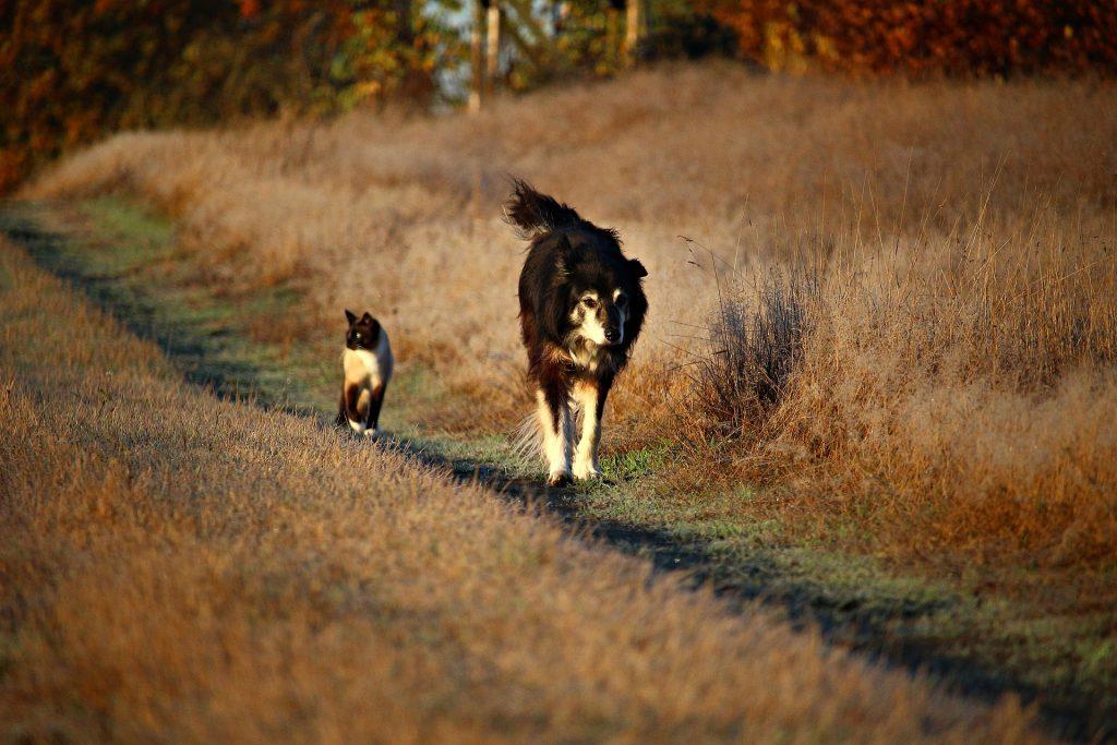 Top Animal Health Links This Week (Dec 10 -16)