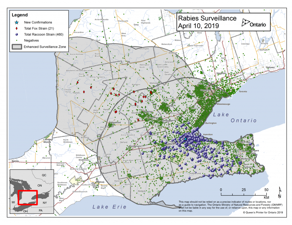 Ontario Rabies Update for April 10 – 1 New Case