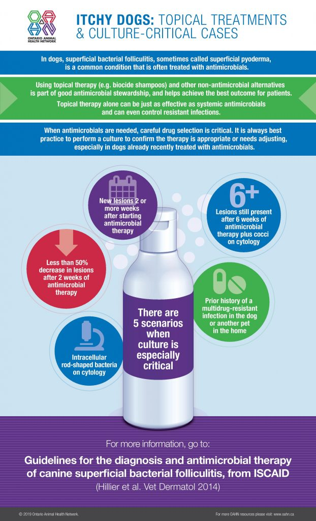 Infographic: Itchy Dogs: Topical Treatments & Culture-Critical Cases