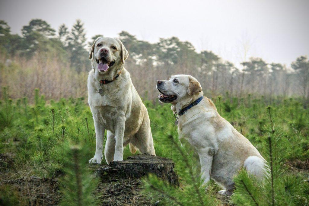 Top Animal Health Links (May 13-19)