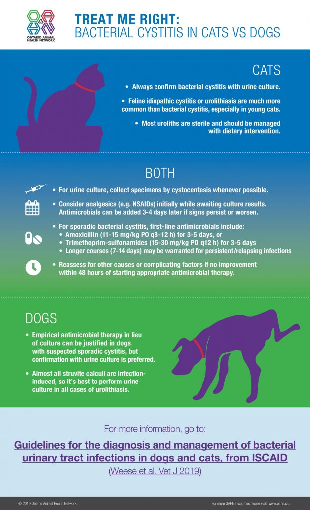 Infographic: Bacterial Cystitis in Cats vs Dogs