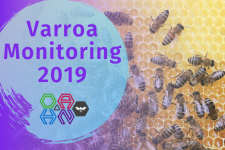 Varroa mite monitoring 2019 with the OAHN Bee network