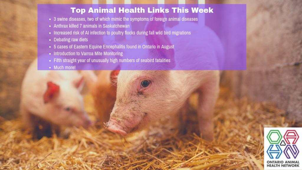 Top Animal Health Links (Sep 9-15)
