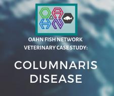 OAHN Fish network Veterinary Case Study: Columnaris disease in an arctic char