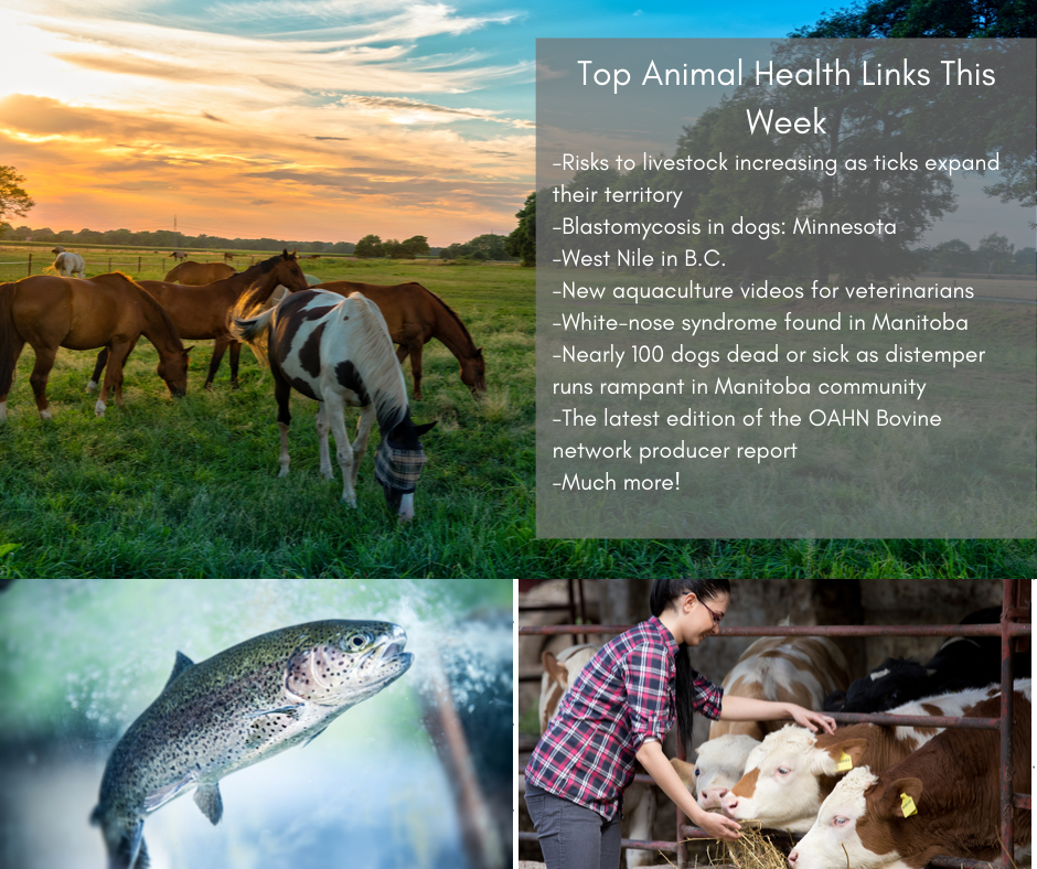Top Animal Health Links (Oct 7-13)