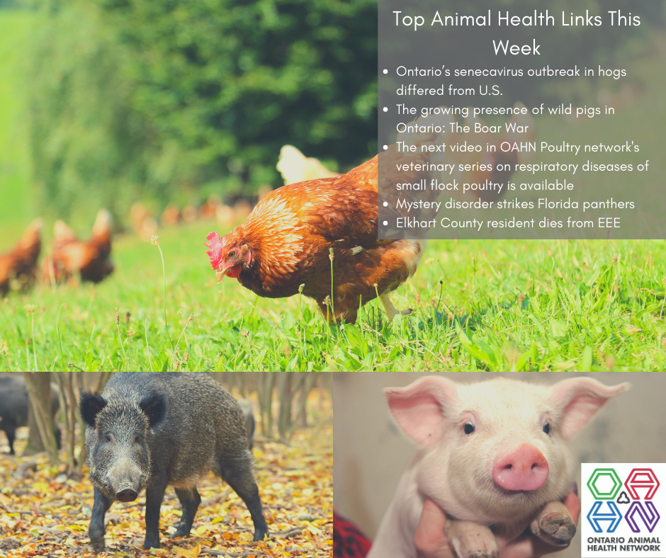 Top Animal Health Links (Oct 14-20)