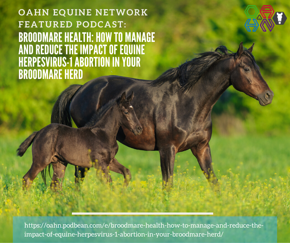 Podcast: Broodmare Health – How to manage and reduce the impact of equine herpesvirus-1 abortion in your broodmare herd