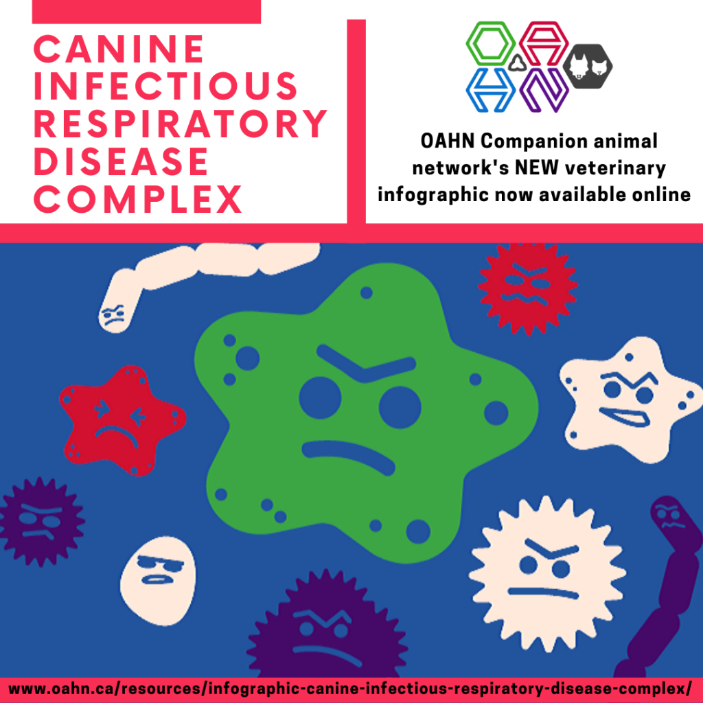 Canine infectious respiratory disease complex infographic