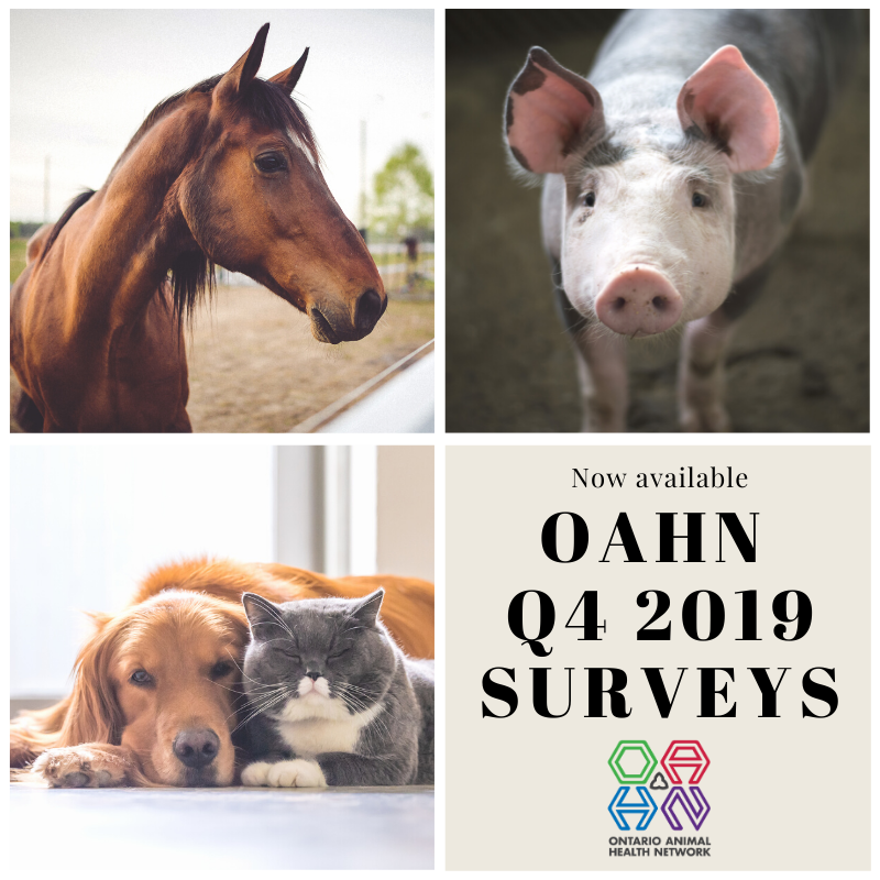 Q4 2019 Veterinary Surveys Now Available