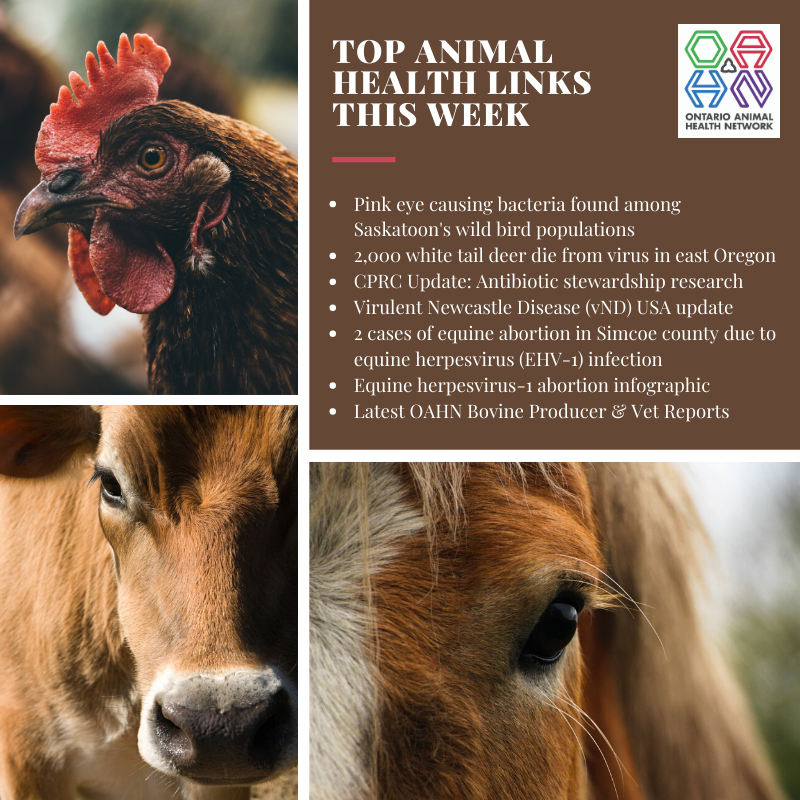 Top Animal Health Links List for OAHN Jan 14-19