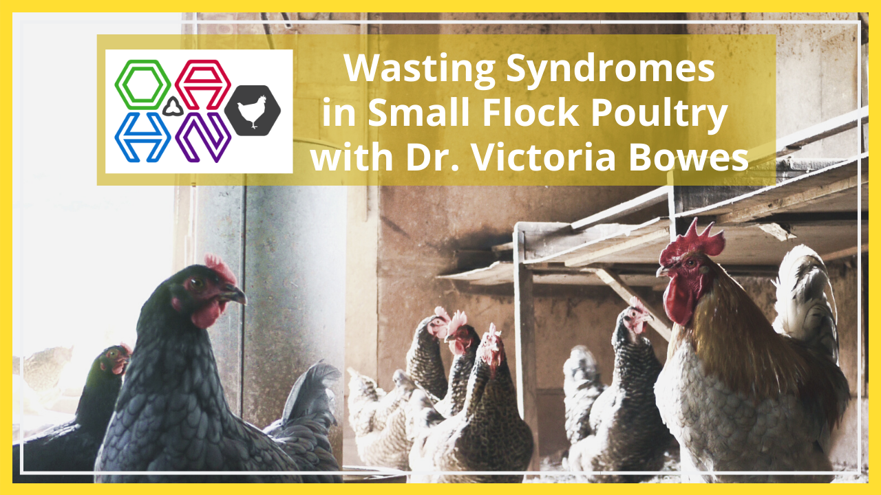 wasting syndromes in small flock poultry