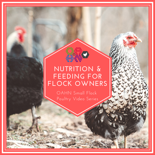 Nutrition and Feeding for Flock Owners