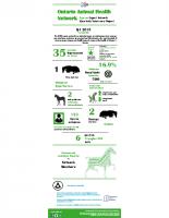 2019 Q4 infographic_Equine