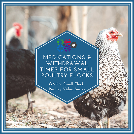 Medications and Withdrawal Times for Flock Owners