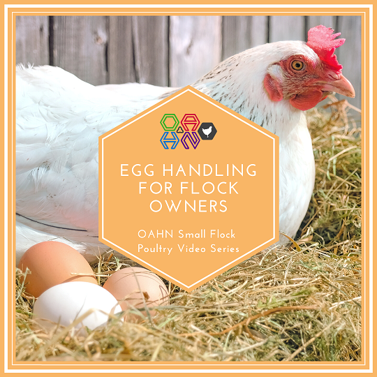 Egg Handling for Flock Owners