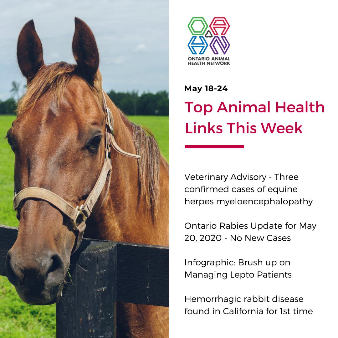 Top Animal Health Links (May 18-24)